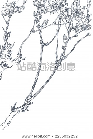 原创手绘樱花 花卉 线描 白描