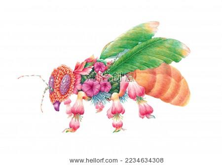 昆虫创意插画,蜜蜂,手绘钢笔画