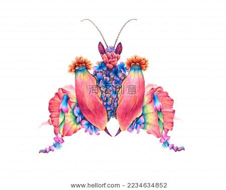 昆虫创意插画,螳螂,手绘钢笔画 昆虫记