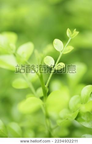 喷绘植物图片素材