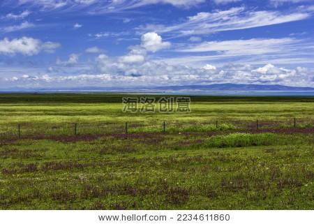 青海湖牧场
