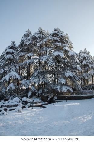 黄山冬季雪景