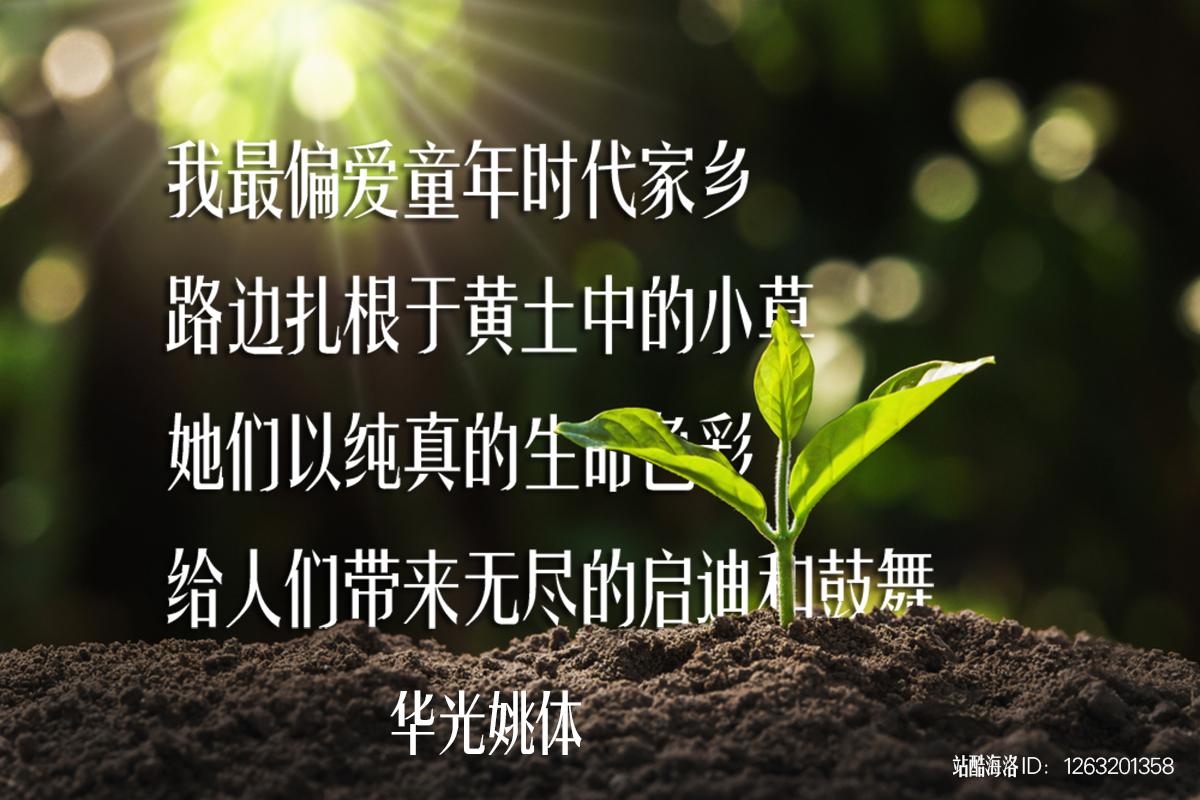 华光姚体-2_1263201358.jpg